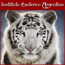 Curso de Empoderamiento del Tigre Blanco